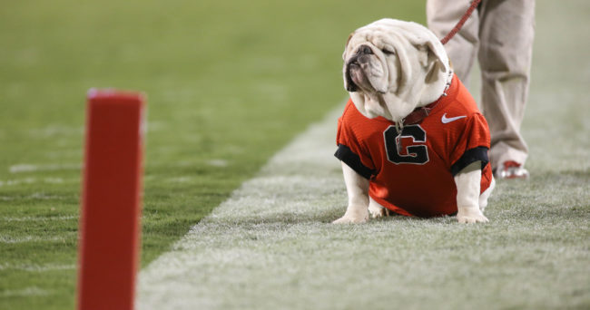 Nov 15, 2014; Athens, GA, USA; Georgia mascot UGA IX is shown on the field during their win over the Auburn Tigers at Sanford Stadium. Georgia won 34-7. Mandatory Credit: Jason Getz-USA TODAY Sports
